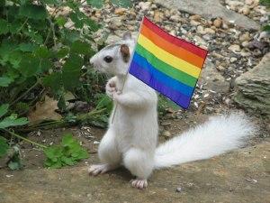 albino squirrel with rainbow flag